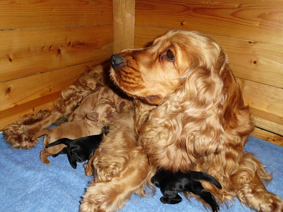 Vivianne with her puppies, 3 days old
